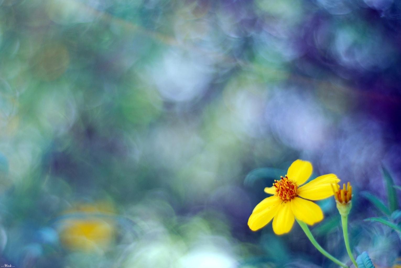 Flor con fuerte desenfoque tomada con un 35mm f/1.8