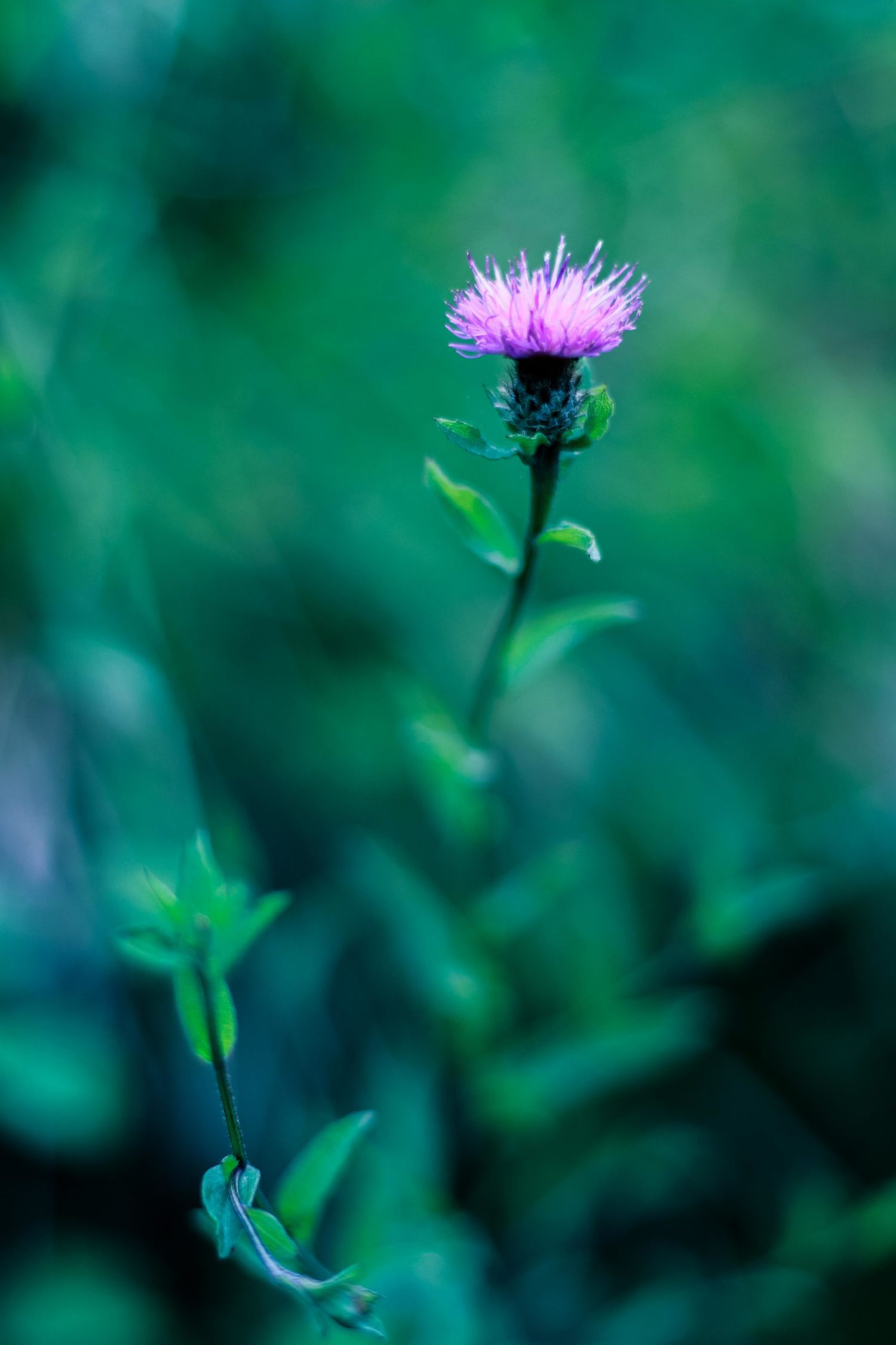 flor con desenfoque