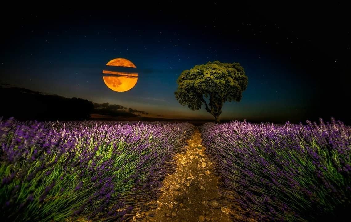 Fotografía nocturna con la luna en un campo de lavandas, ganadora del fotoreto32