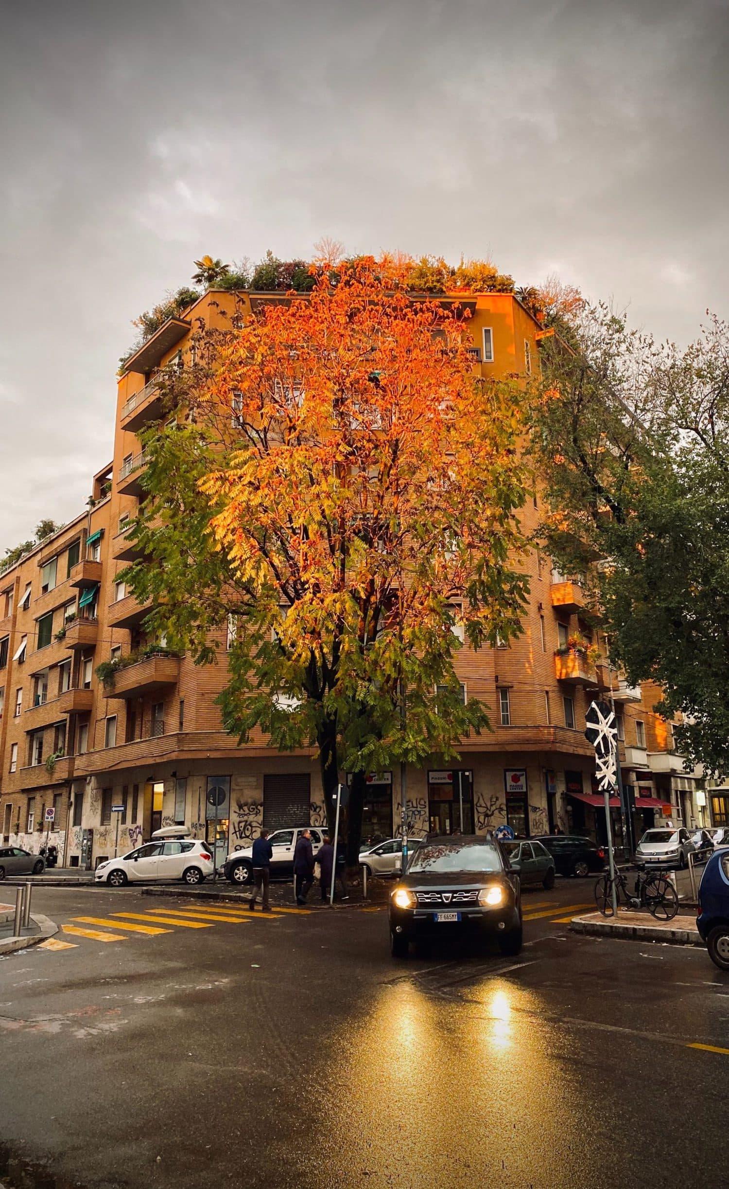 calle con árbol en otoño, tomada con un iPhone11