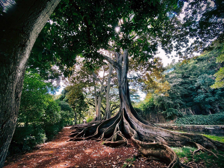árbol con grandes raíces