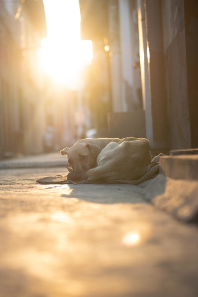Perro tumbado en la acera con luz cálida de fondo