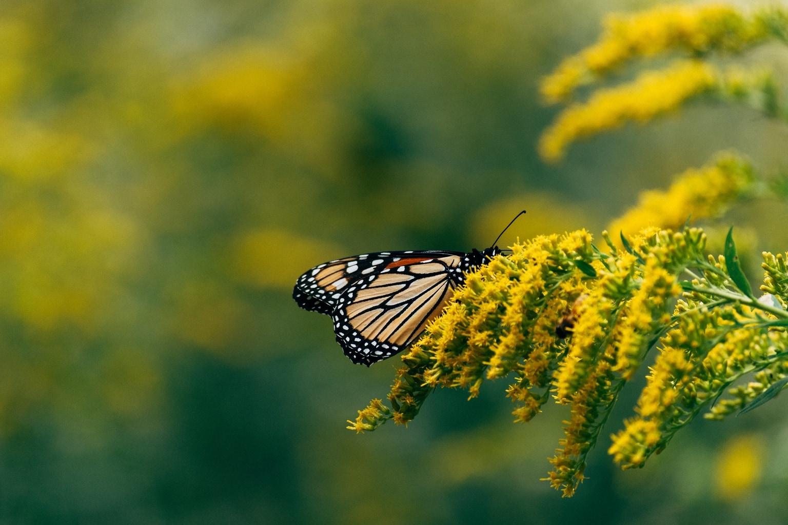 Mariposa fotografiada con una Nikon D3500