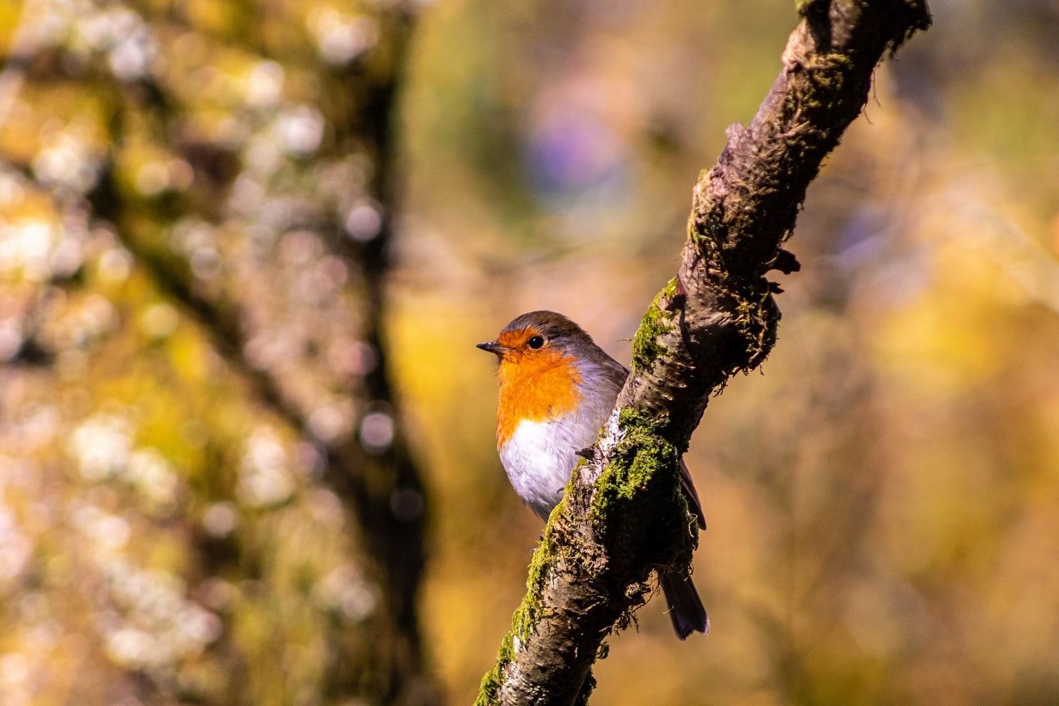 Pájaro descansando en una rama fotografiado con una cámara réflex barata