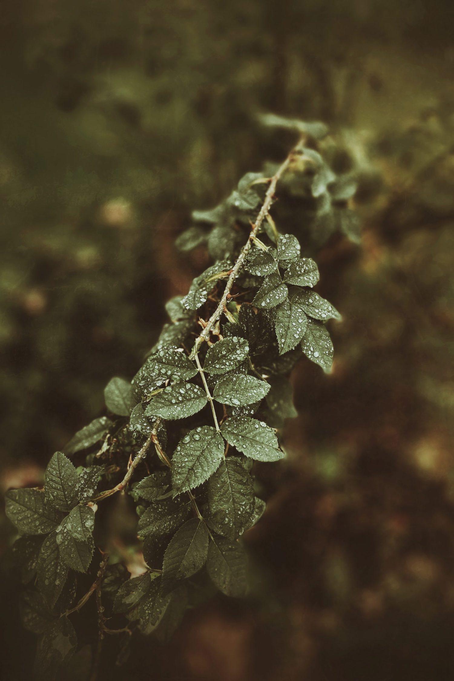 Planta con rocío
