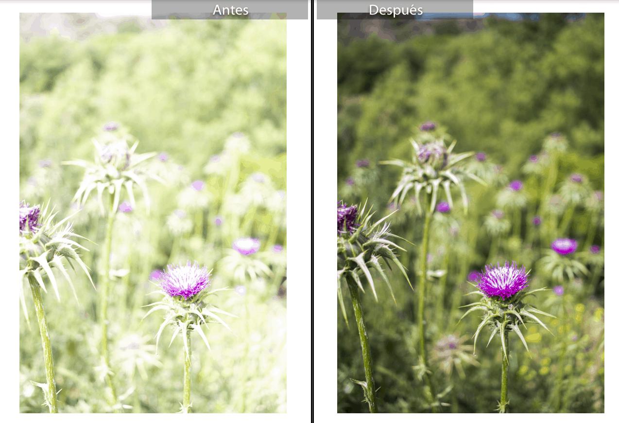 Flores sobreexpuestas en RAW y editadas