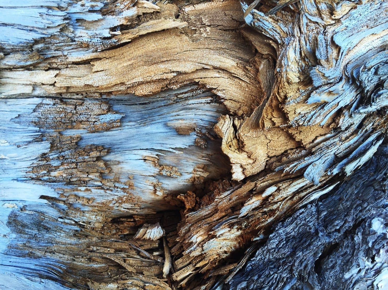 Abstracto para el Fotoreto41