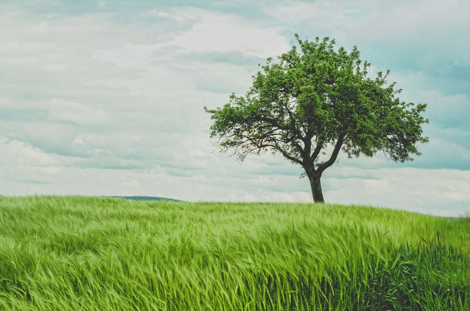 naturaleza solitaria