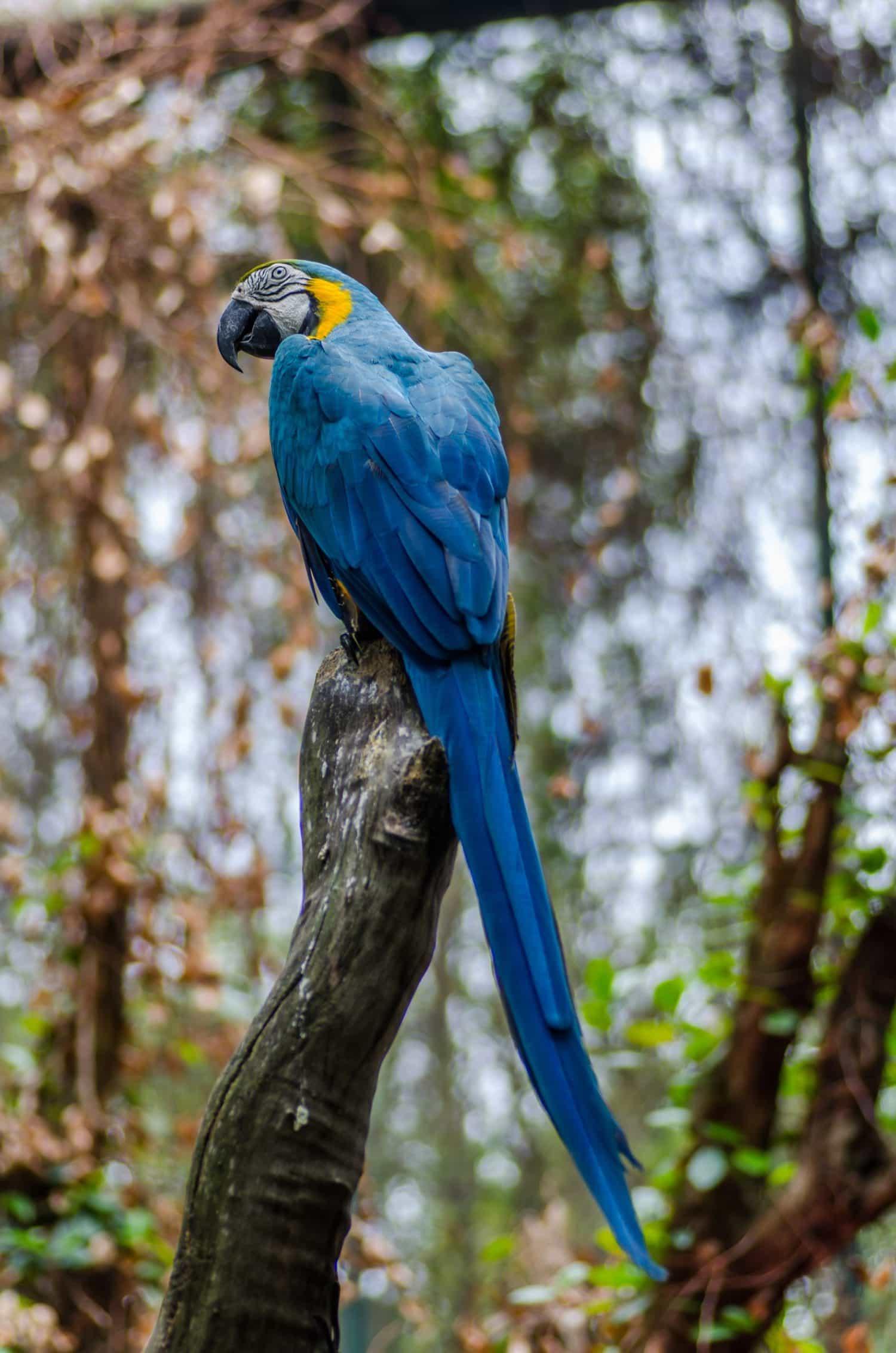ejemplo de foto de naturaleza, papagayo