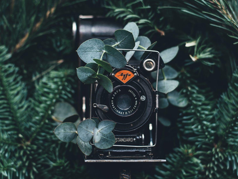 Cámara vintage escondida entre plantas