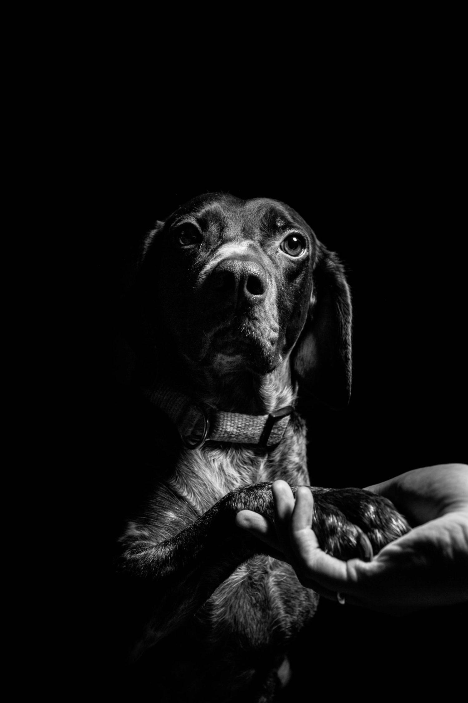 Perro fotografiado en clave baja