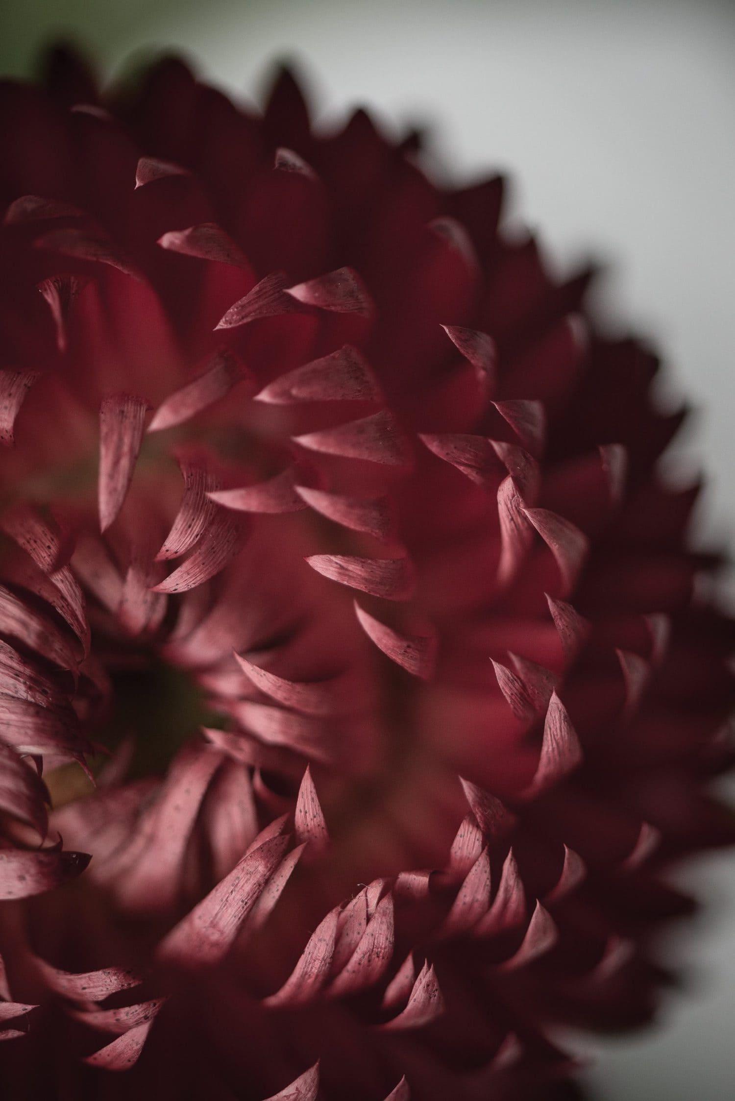 flor captada con un objetivo macro