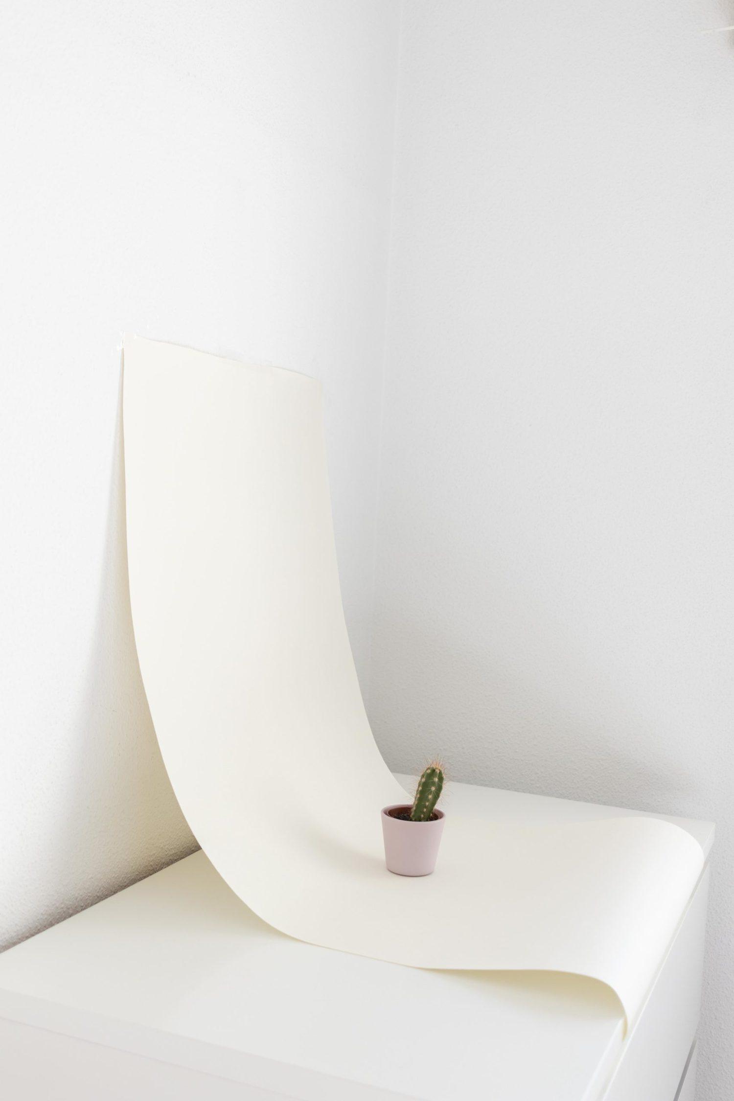 Cactus en fondo infinito casero