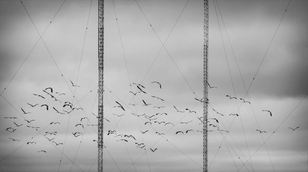 fotografía de líneas ganadora del fotoreto37