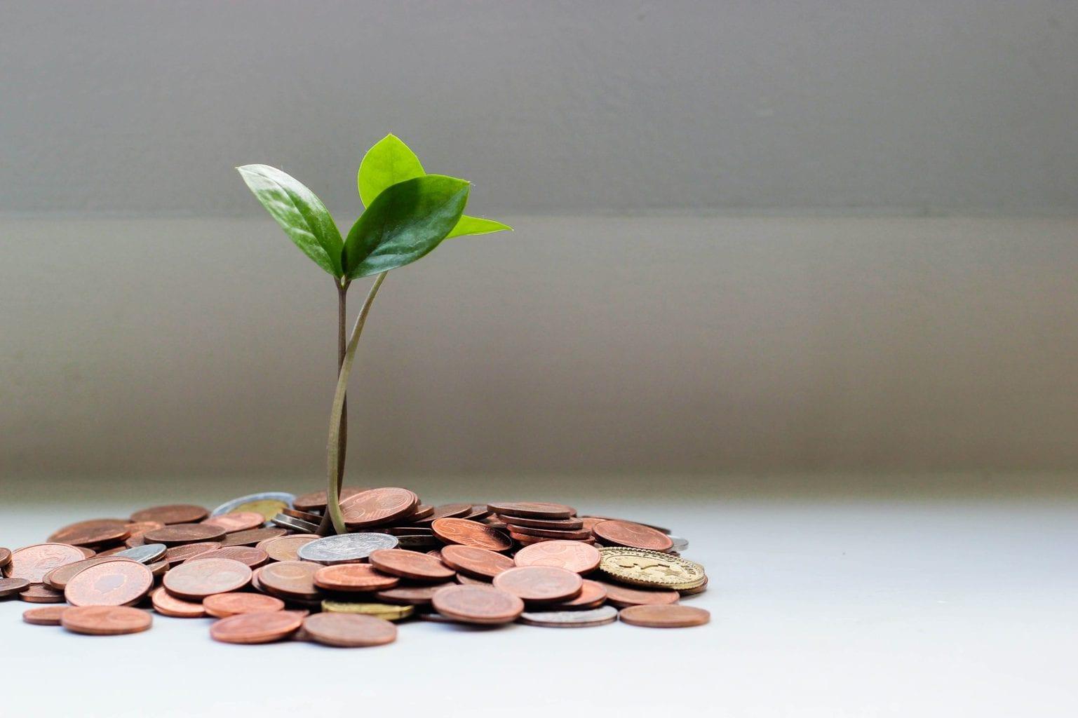 Planta saliendo de monedas, imagen comercial