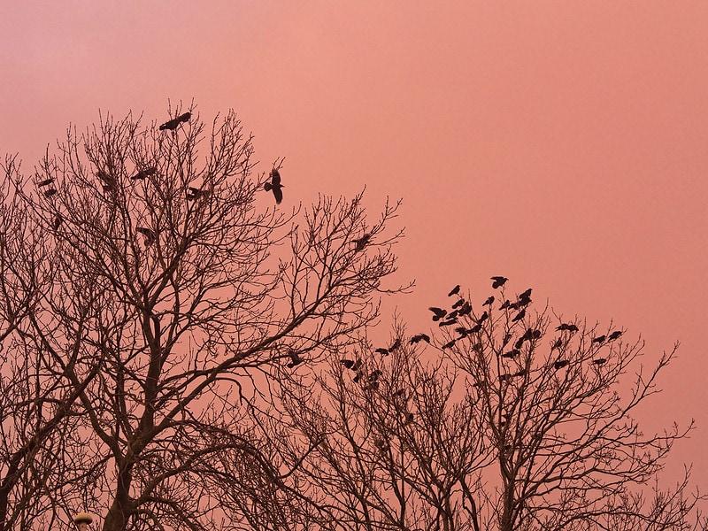 Silueta de árboles y pájaros tomada con un M.Zuiko Digital 45mm f/1.8