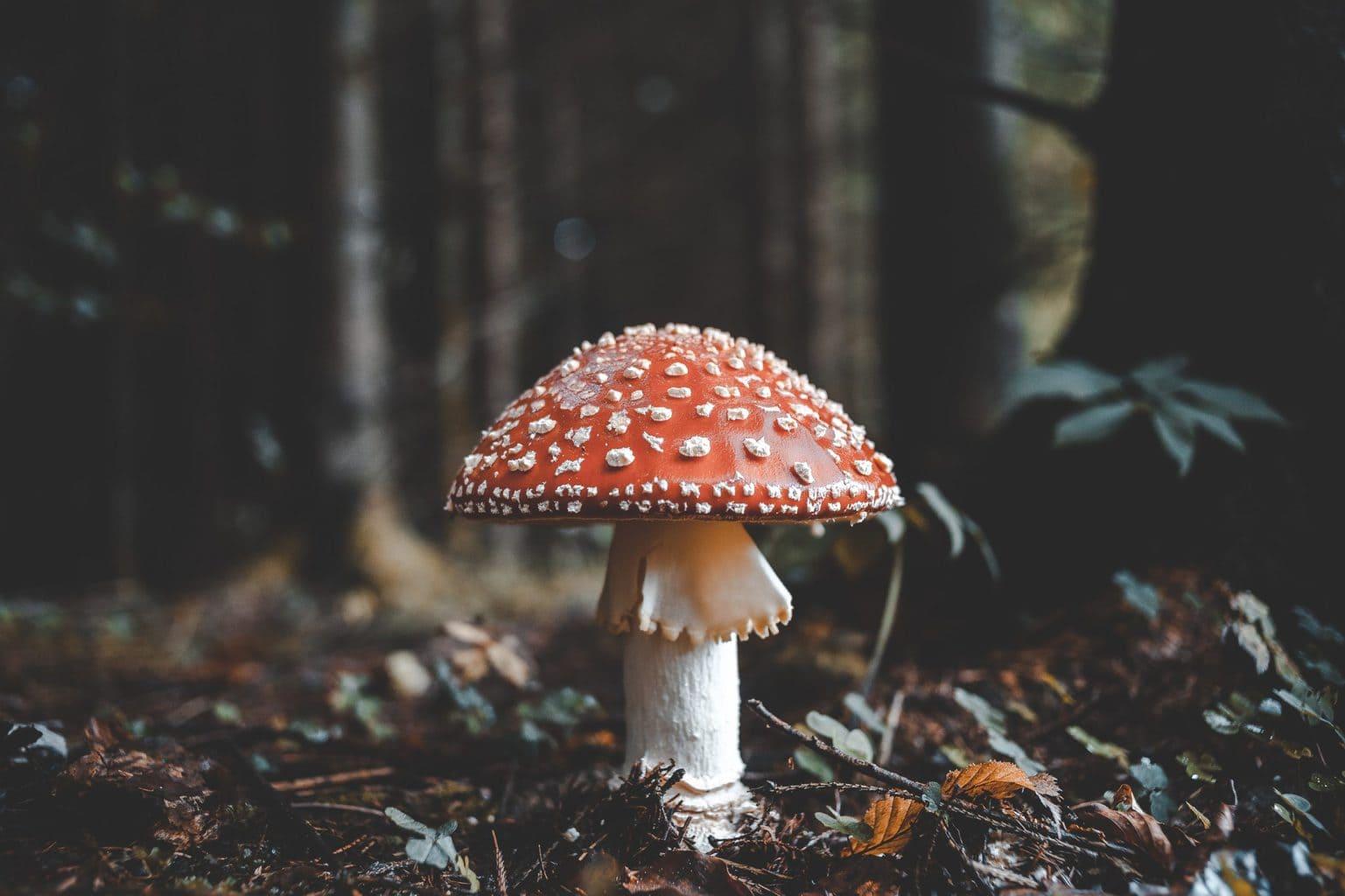 seta en bosque