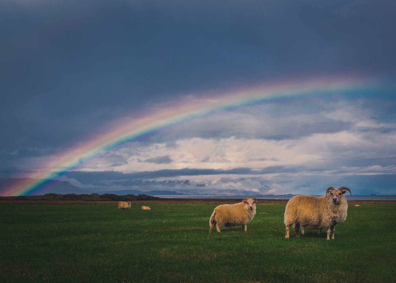 Arcoíris como encuadre natural de animales