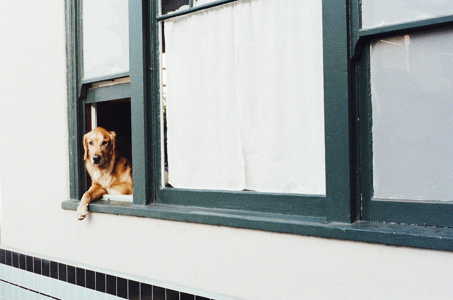 perro regla tercios