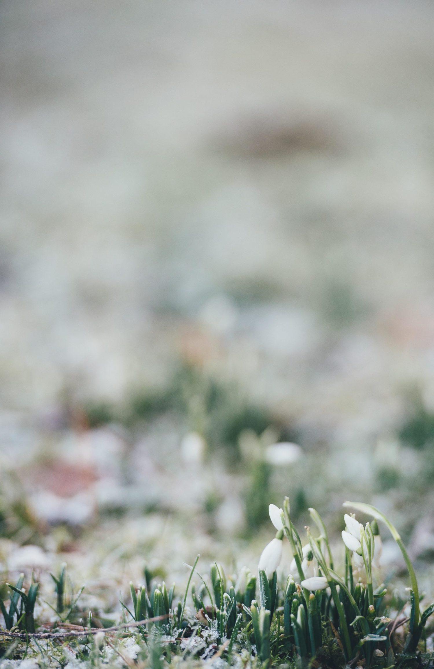 Imagen de flores con profundidad de campo muy pequeña