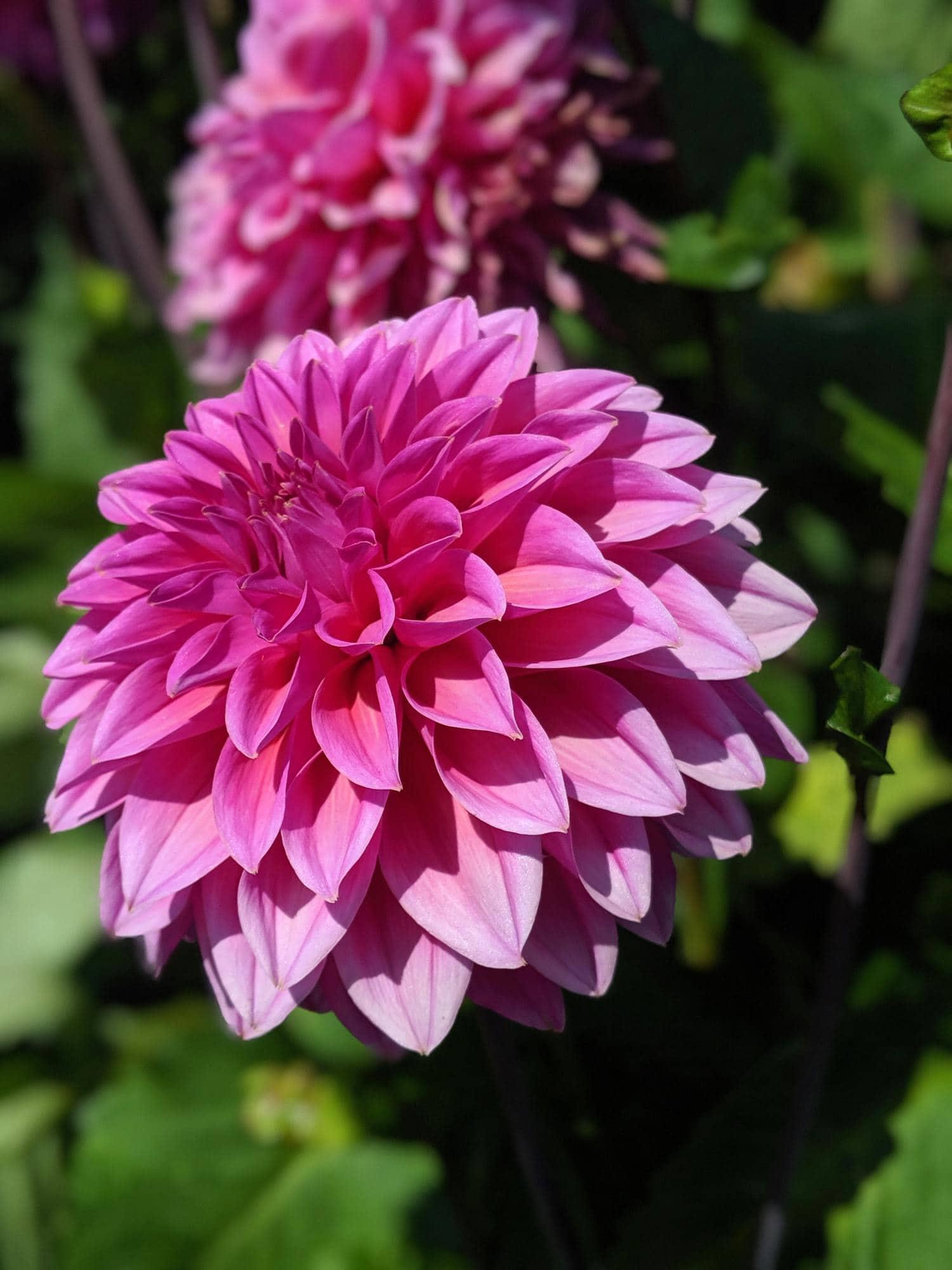 Foto de flor tomada con luz dura