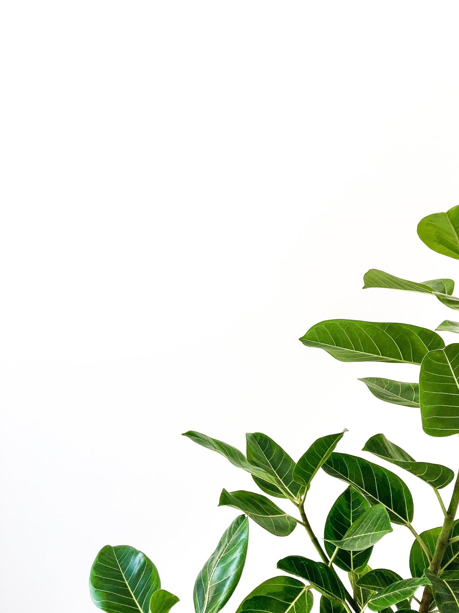 Planta con fondo blanco
