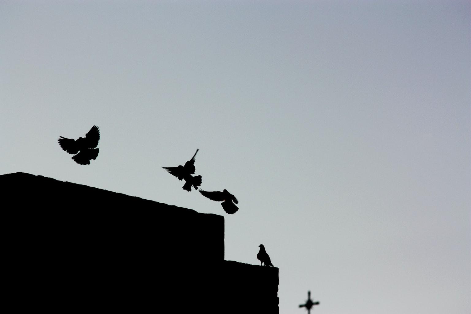 Silueta de varios pájaros en vuelo y reposo