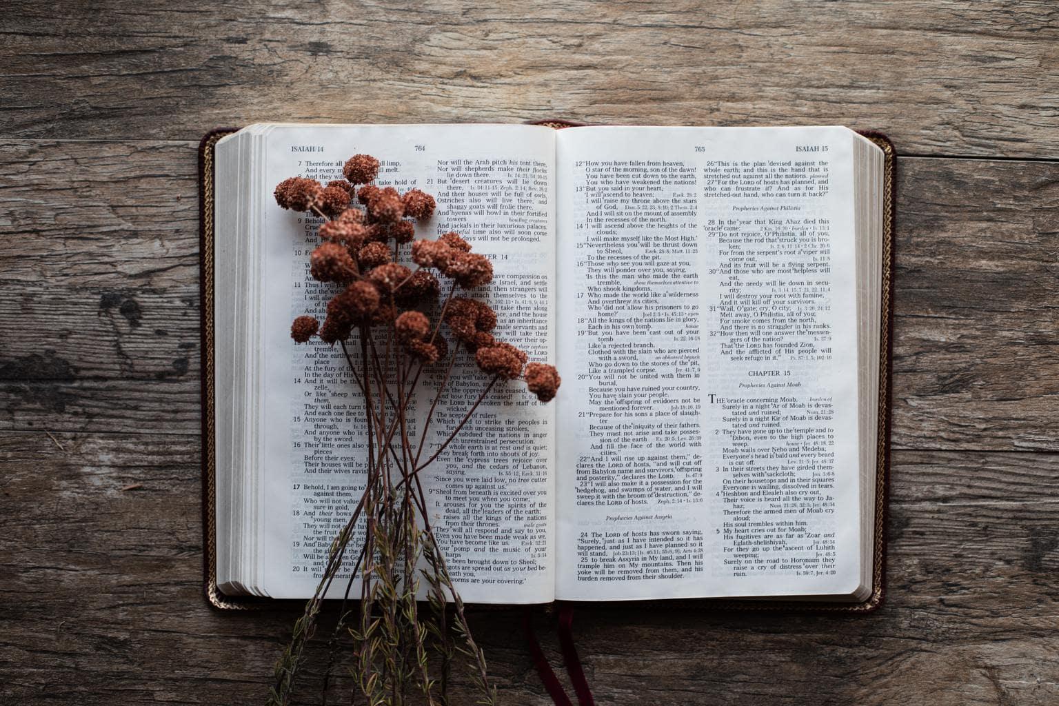 biblia flores secas