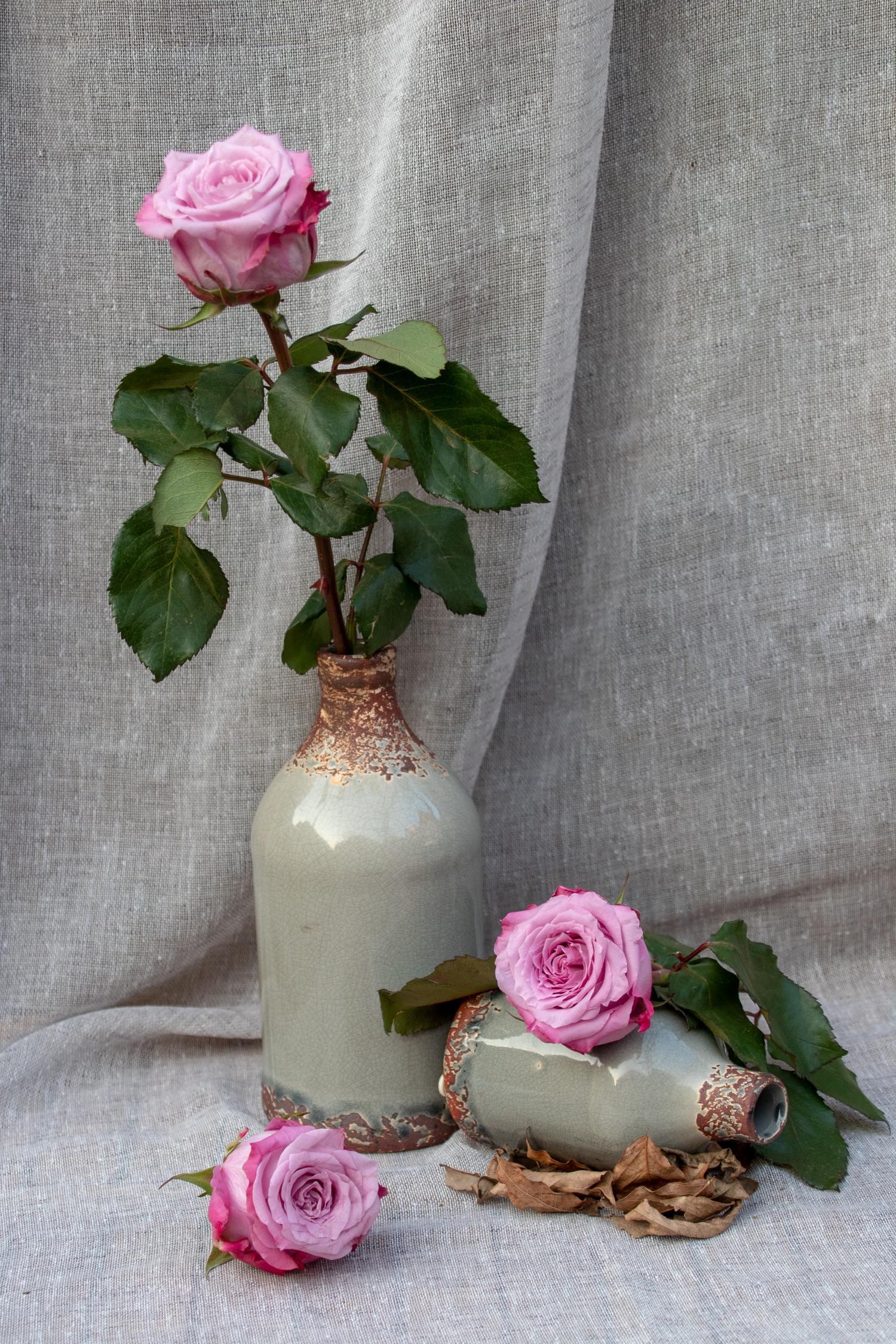 rosas bodegón