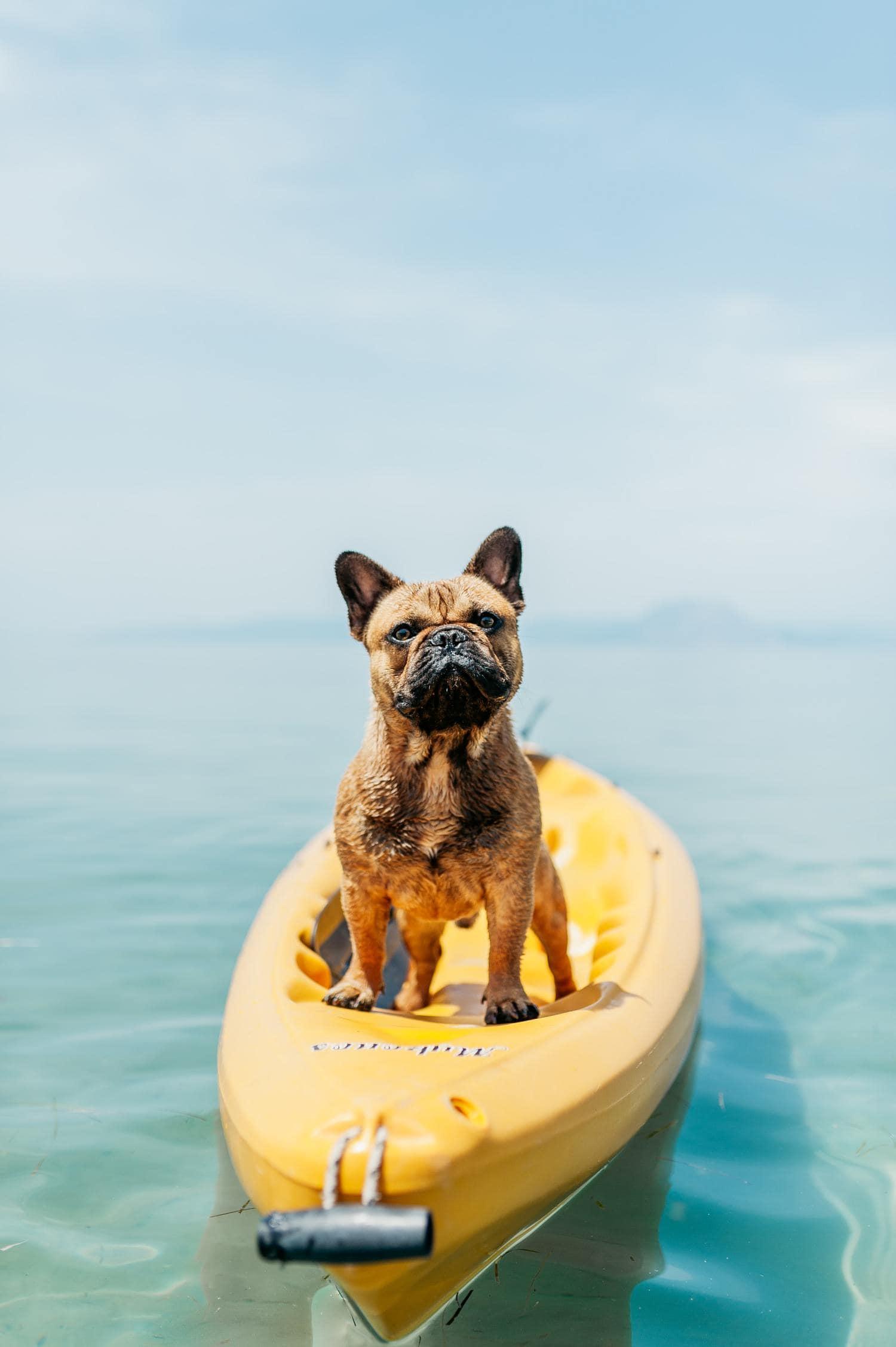 perro surf
