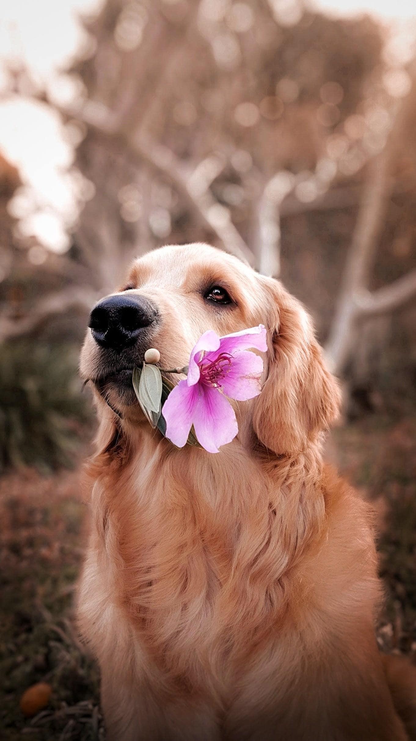 perro con flor en la boca y fondo desenfocado
