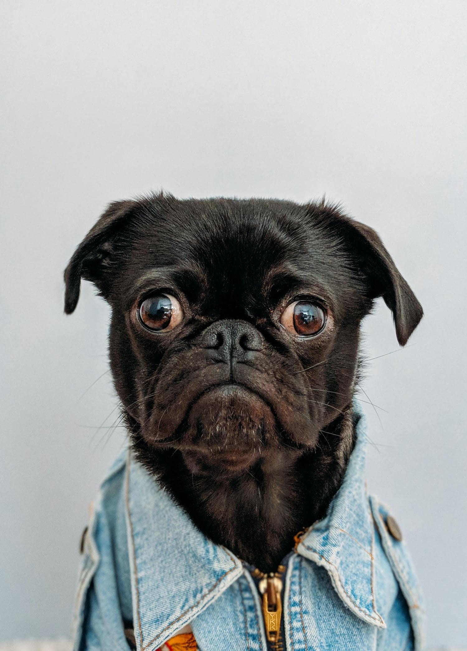 perro con camisa tejana