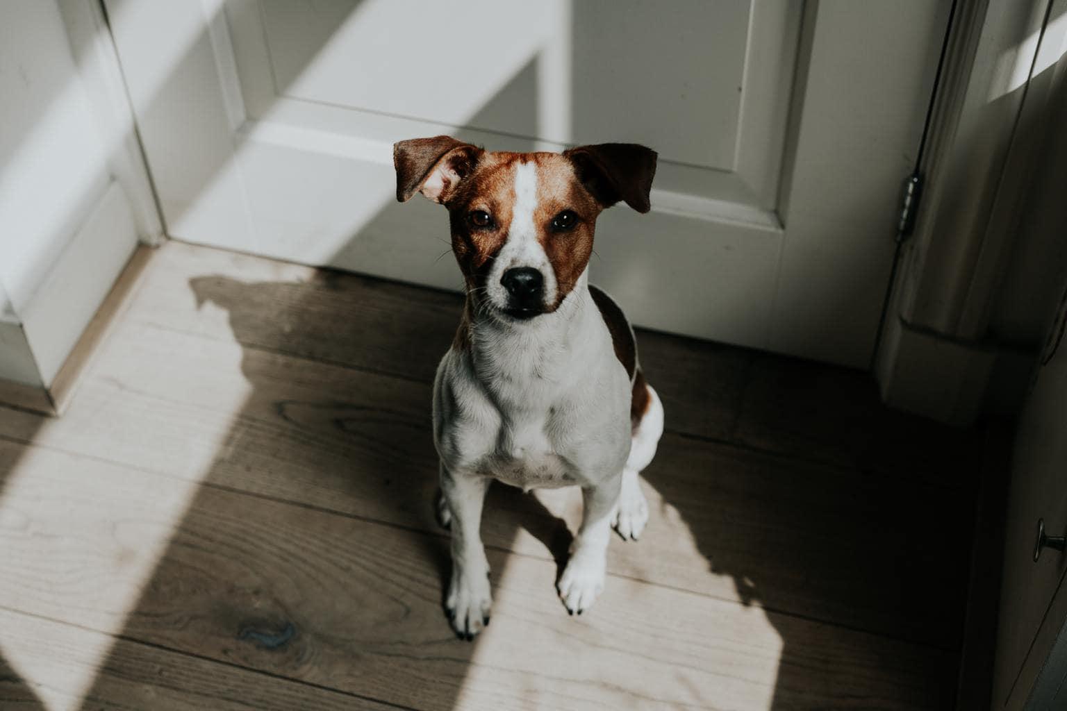 perro luz