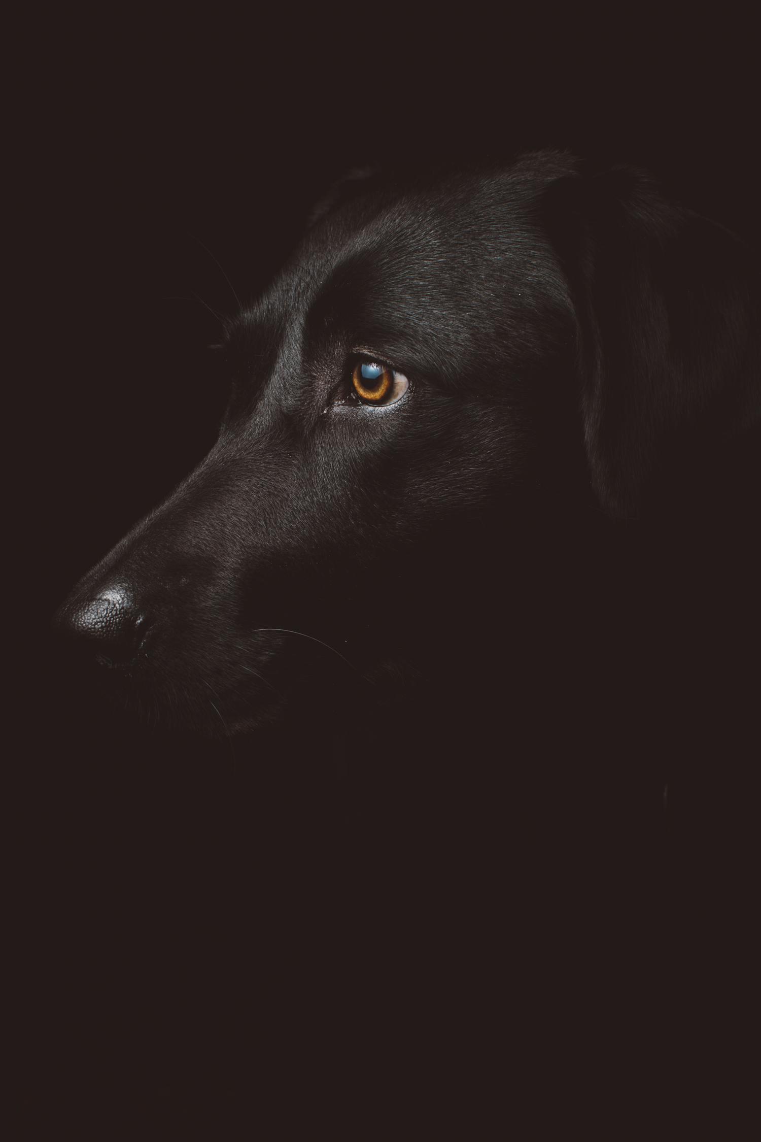 foto de perro en clave baja