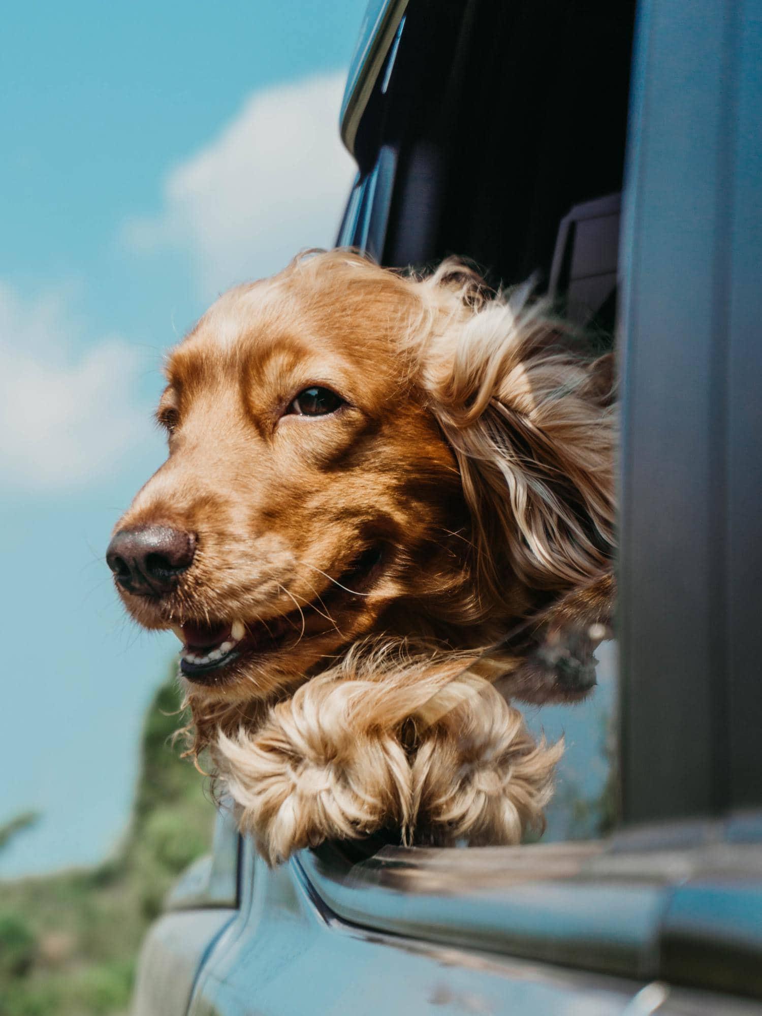 foto de perro asomando por la ventana del coche