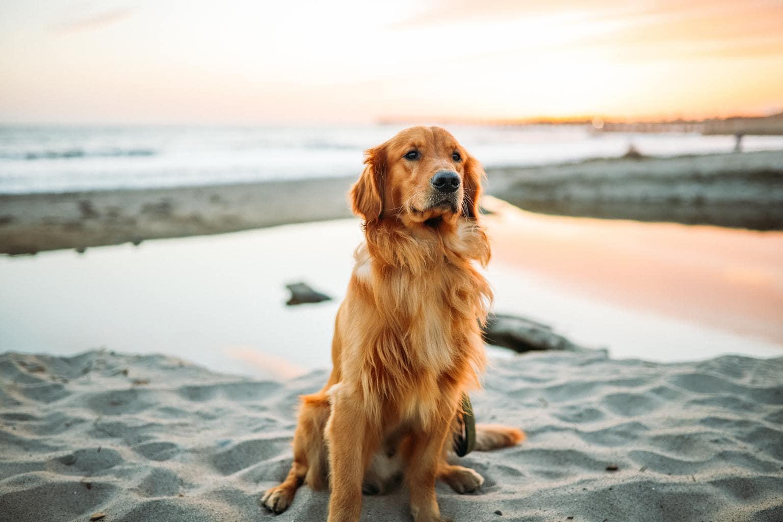 foto de perro en la playa al atardecer