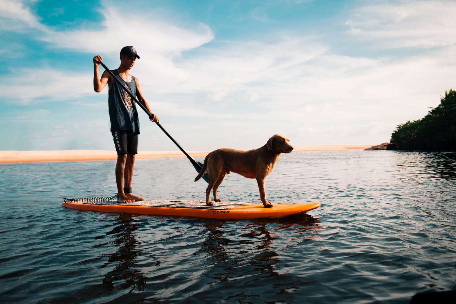 perro paddlesurf