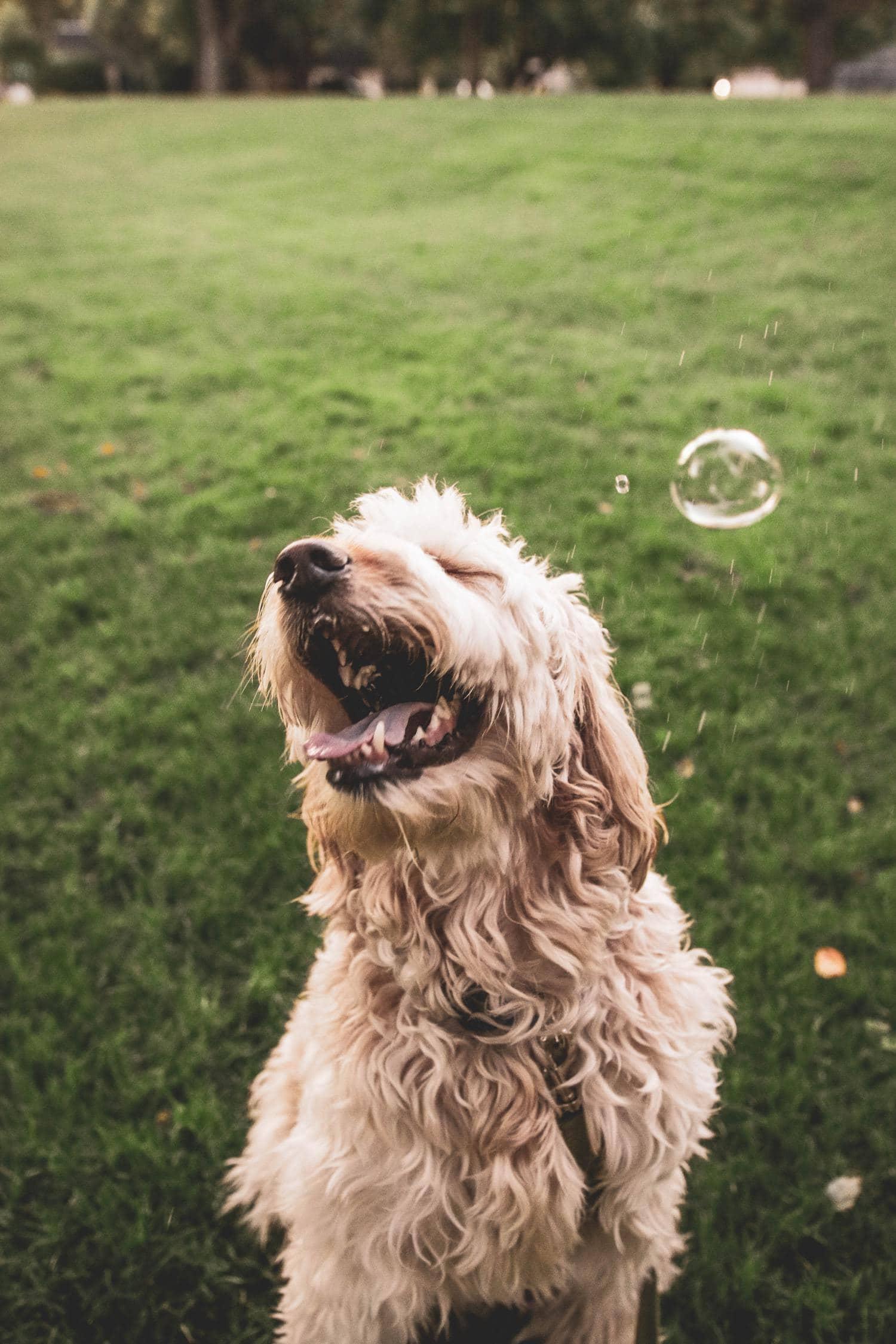foto de perro con burbuja de jabón