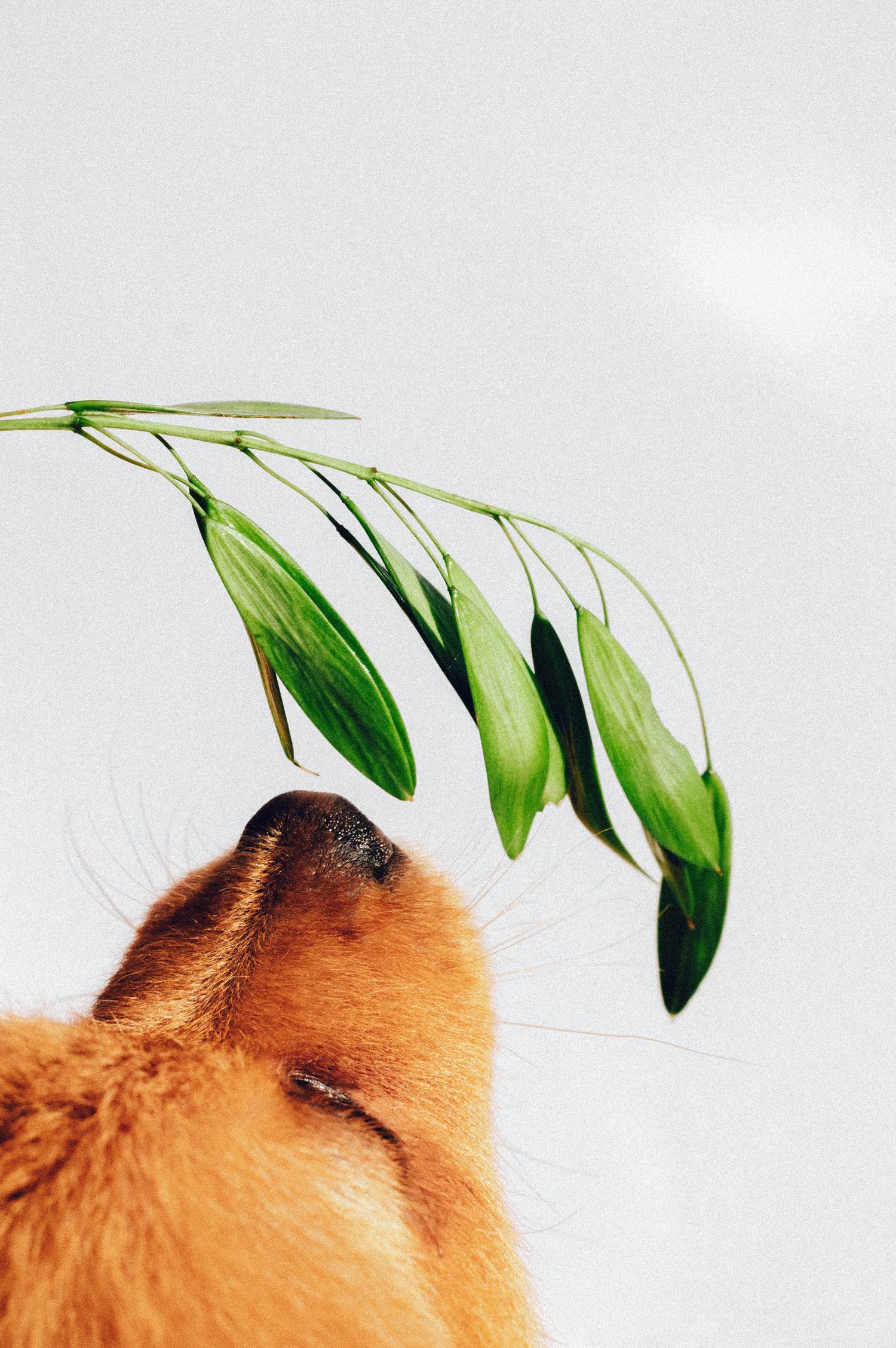 hocico de perro oliendo planta