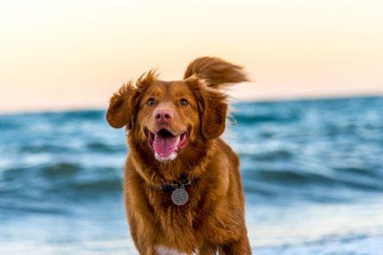 perro playa corriendo