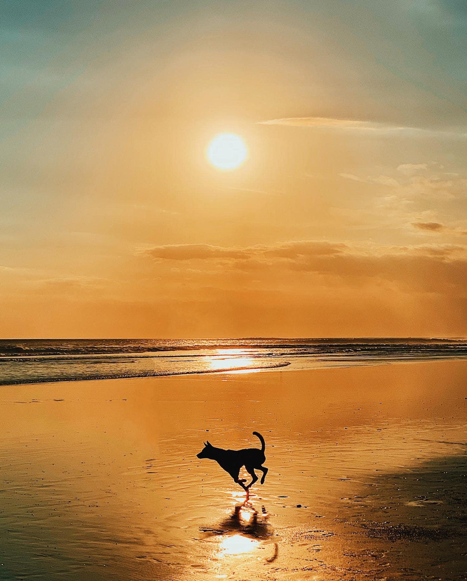 silueta de perro en playa al atardecer