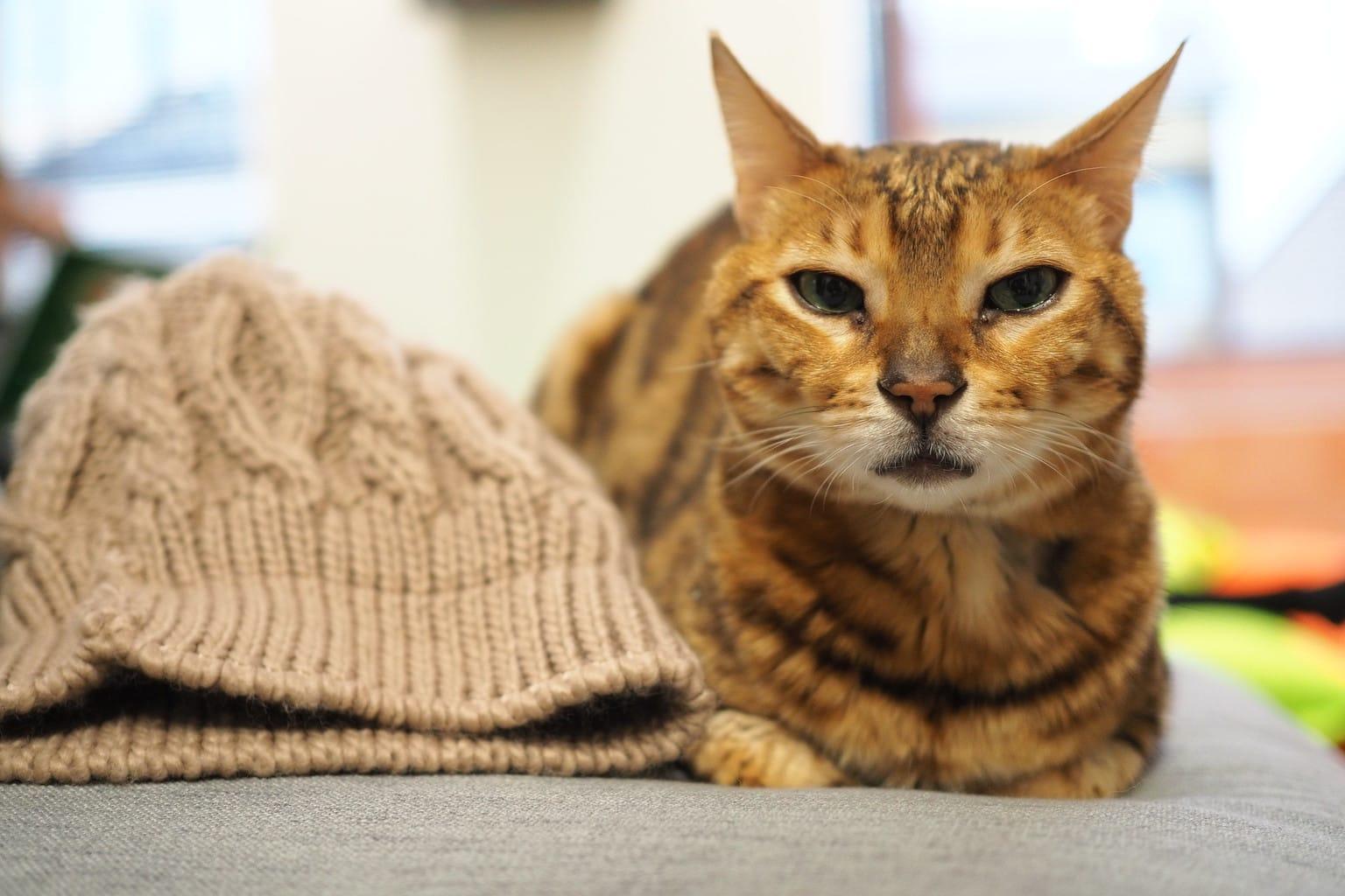 gato olympus E‑PL10