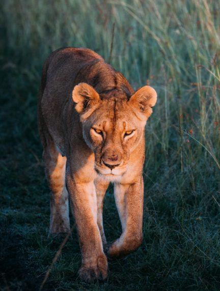 portada para artículo de fotografía de fauna salvaje