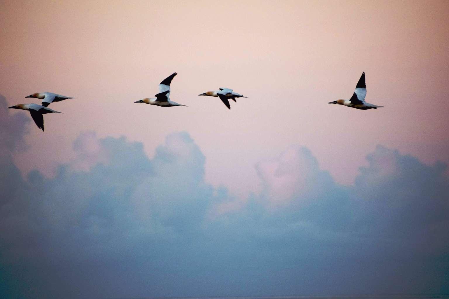 Pájaros voladores