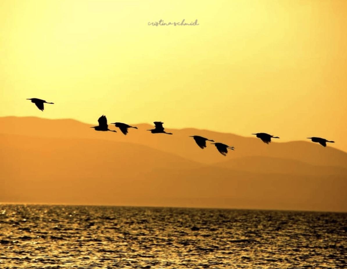 paisaje atardecer pájaros