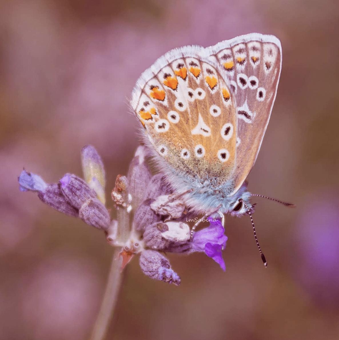 Mariposa sobre flor ganadora del fotoreto62 de naturaleza