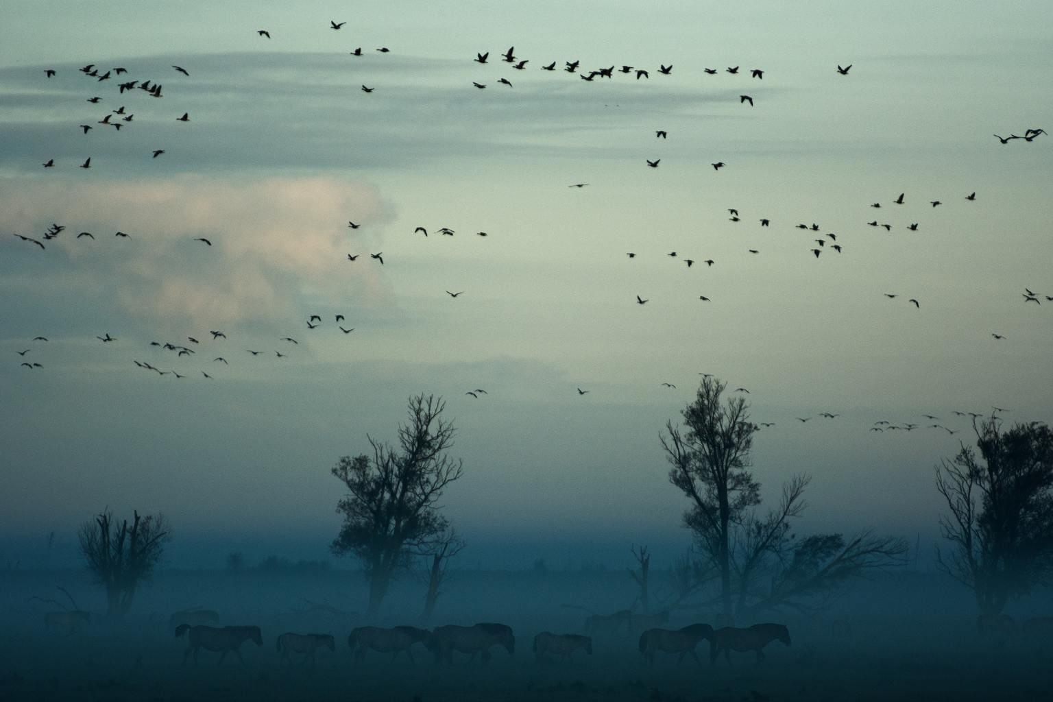 Paisaje con pájaros en el cielo