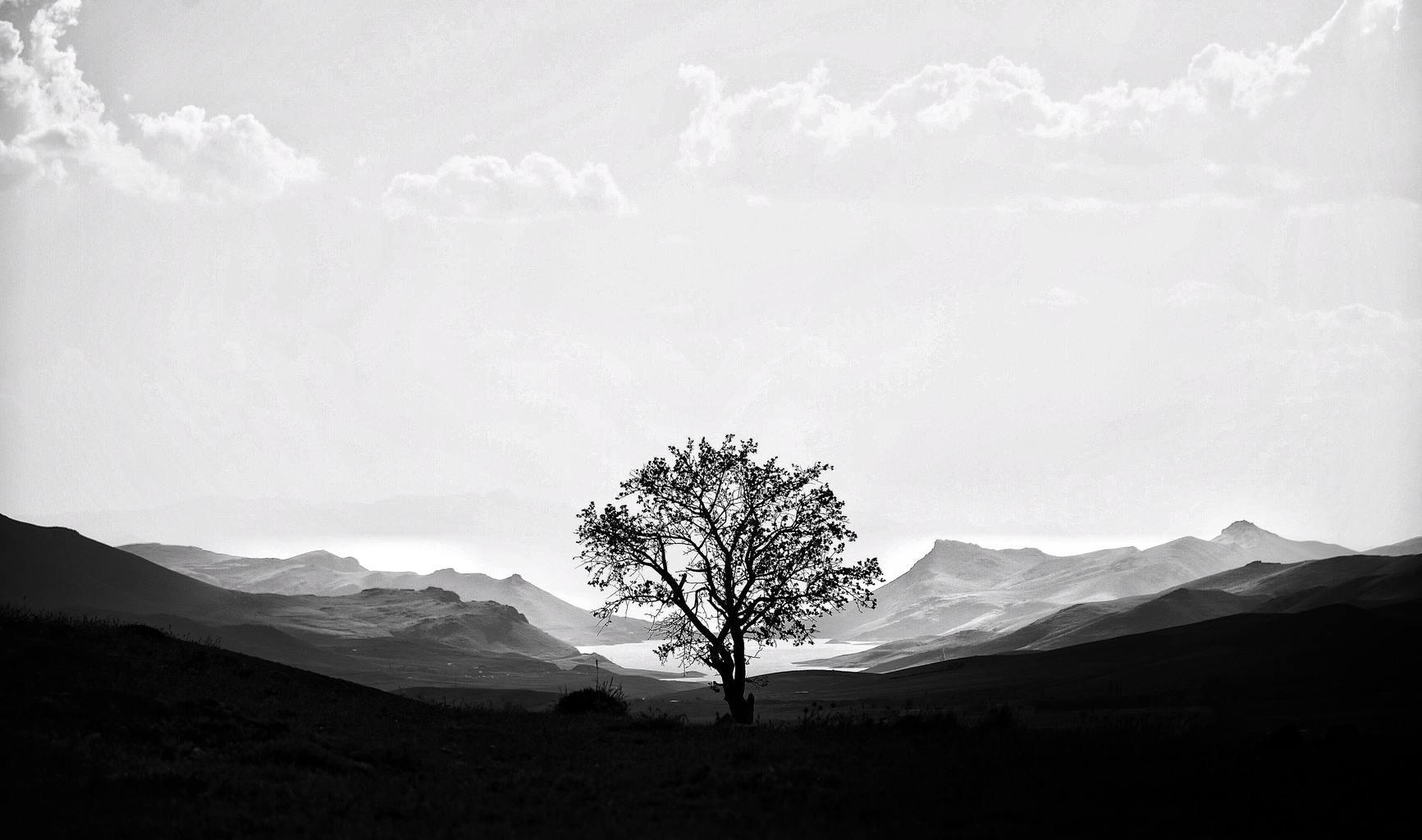 черно-белый пейзаж с деревом и горами