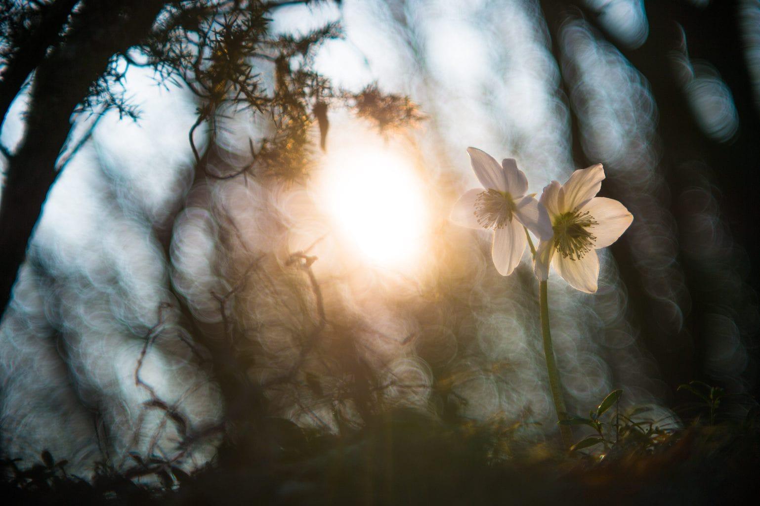 Flor a contraluz para ejercicio fotográfico