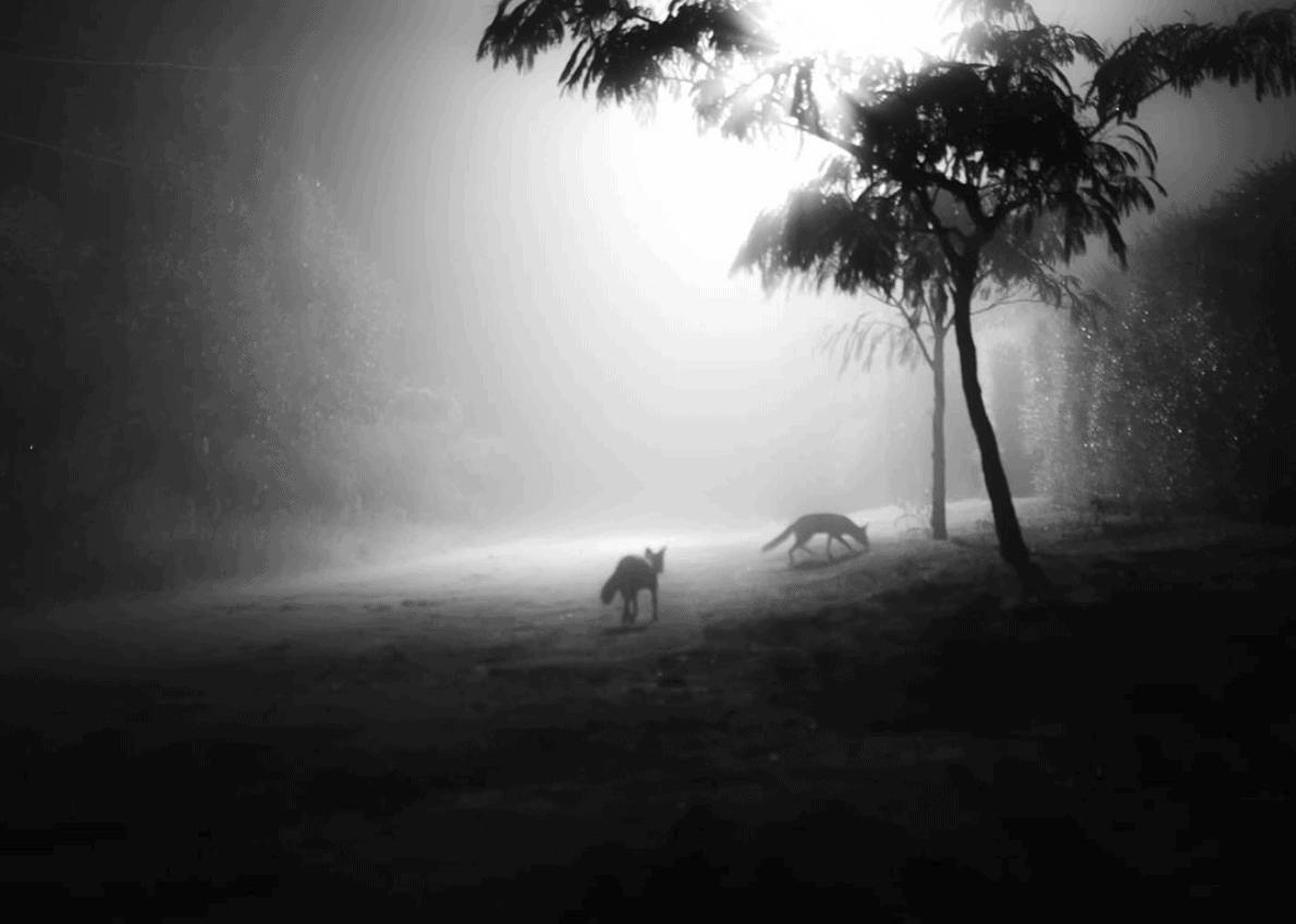 Zorros en la niebla, fotografía ganadora del Fotoreto67